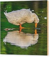 Pekin Duck Wood Print