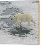 Polar Bear Crossing Ice Floe Wood Print
