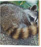 Raccoon Wood Print