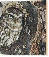 100205p258 Wood Print