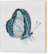 101 Perched Danis Danis Butterfly Wood Print