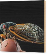 A Detailed View Of A Brood II Cicada Wood Print