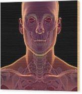 Bones Of The Head And Neck Wood Print