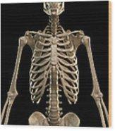 Bones Of The Upper Body Wood Print