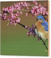 Eastern Bluebird (sialia Sialis Wood Print