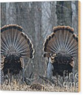 Jake Eastern Wild Turkeys Wood Print by Linda Freshwaters Arndt