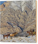 North America, Usa, Wyoming, Shell Wood Print