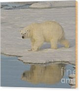 Polar Bear Walking On Ice Wood Print