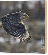 Rough-legged Hawk Wood Print