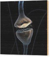 Synapse Wood Print