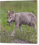 Timber Wolf Pup Wood Print