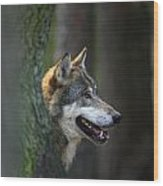 110221p044 Wood Print