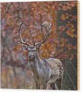 110221p135 Wood Print