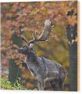 110221p137 Wood Print