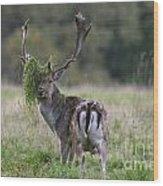 110221p138 Wood Print