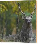 110307p070 Wood Print