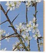 110506p221 Wood Print