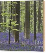 110506p243 Wood Print