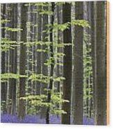 110506p244 Wood Print