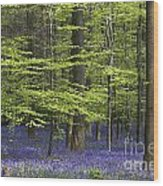 110506p248 Wood Print