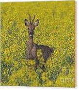 110714p142 Wood Print