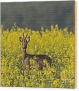 110714p143 Wood Print