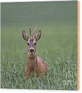 110714p319 Wood Print