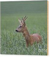 110714p320 Wood Print