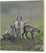 111130p062 Wood Print