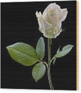 111216p340 Wood Print