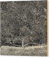 11282013022 Wood Print