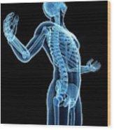 Human Skeletal System Wood Print