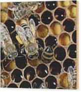 Honey Bees On Honeycomb Wood Print