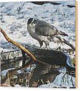 1145p Northern Goshawk Wood Print