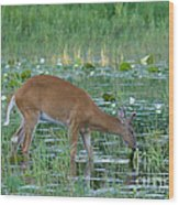 White-tailed Buck Wood Print by Linda Freshwaters Arndt