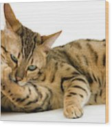 Bengal Brown Spotted Tabby Wood Print
