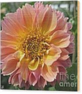 Dahlia From The Showpiece Mix Wood Print
