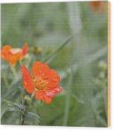 Scarlet Avens Orange Wild Flower Wood Print