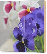Viola Tricolor Heartsease Wood Print
