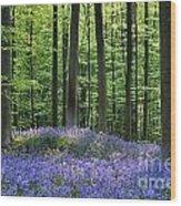 120206p191 Wood Print