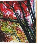 12032013003 Wood Print