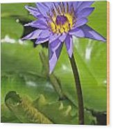 120520p014 Wood Print