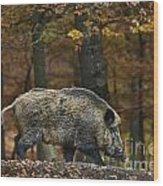 121213p284 Wood Print