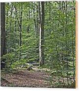 121213p305 Wood Print