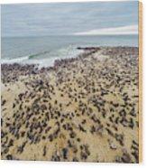 Cape Cross, Namibia, Africa - Cape Fur Wood Print