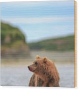 Grizzly Bears Also Called Brown Bears Wood Print