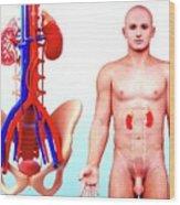 Human Kidney Wood Print