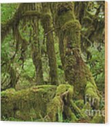 Olympic National Park Wood Print