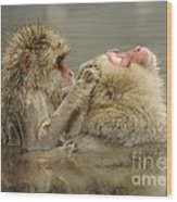 Snow Monkeys Wood Print