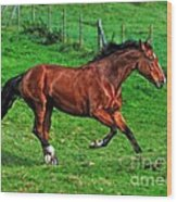The Bay Horse  Wood Print